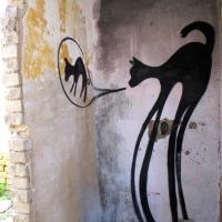 """Tono Cruz (CNFSN): """"Gato negro en la vaquería"""""""