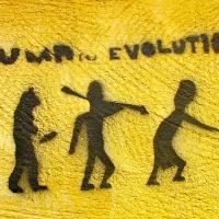 """Human Evolution?"""